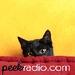 Peekradio Logo